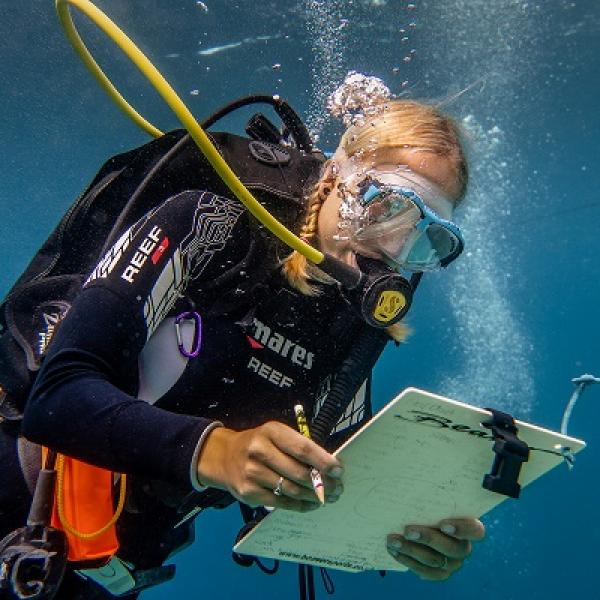 Volunteer on a reef check survey